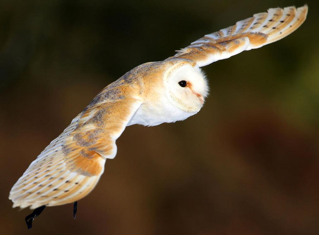 Flight of the owl by Photophilde